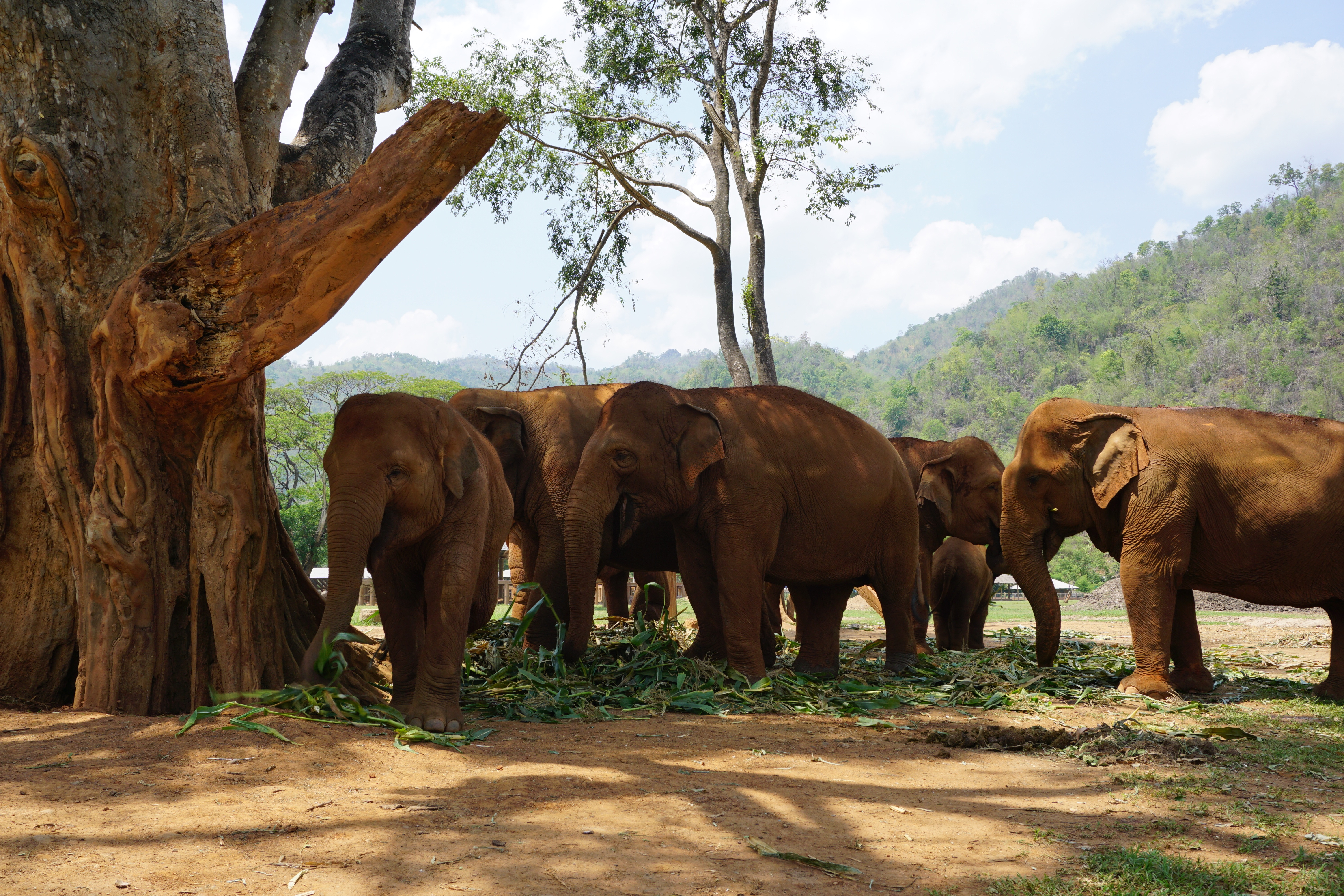Chiang Mai's Incredible Elephant Nature Park