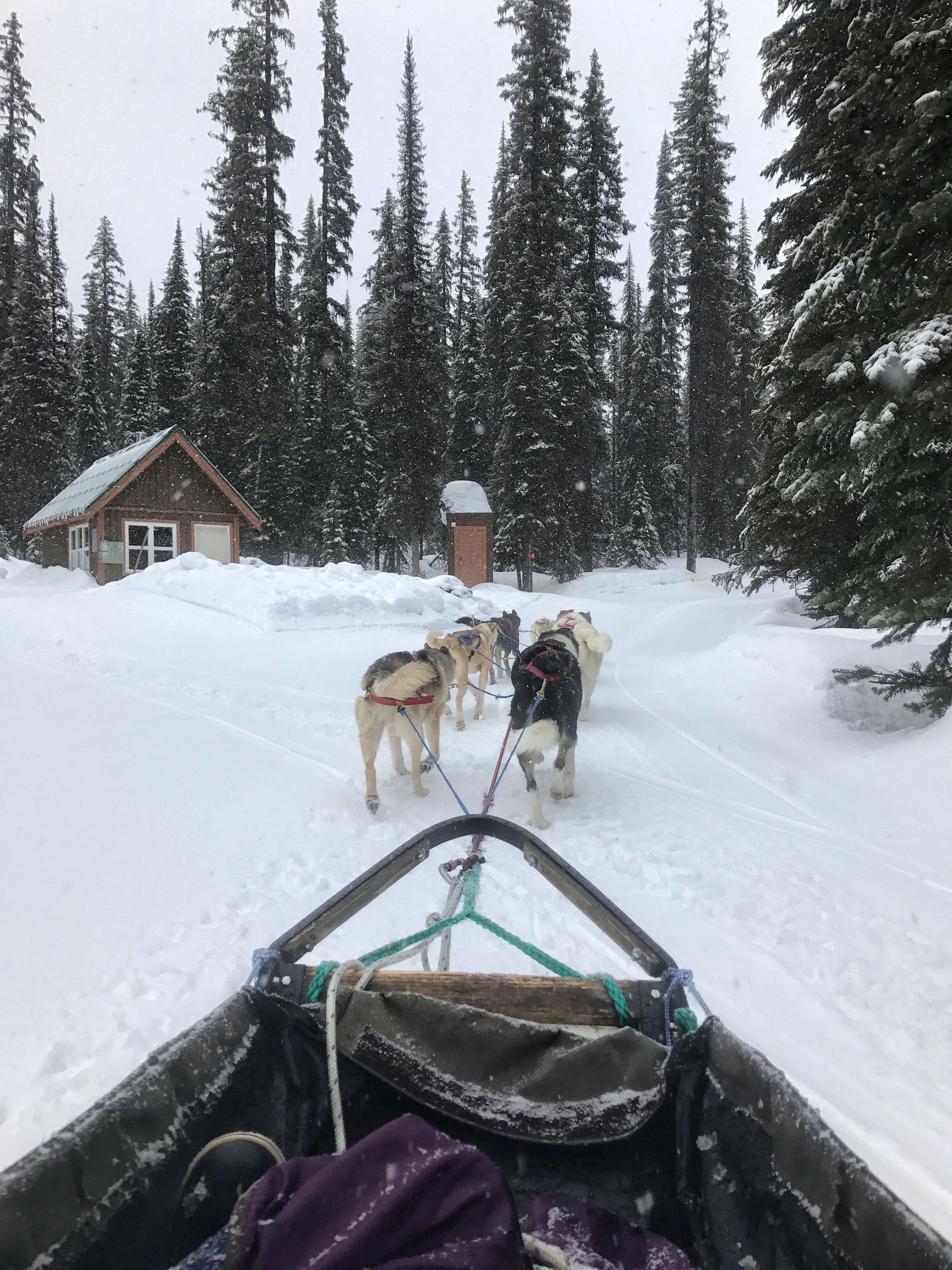 Dog Sledding in Big White – A True Canadian Experience